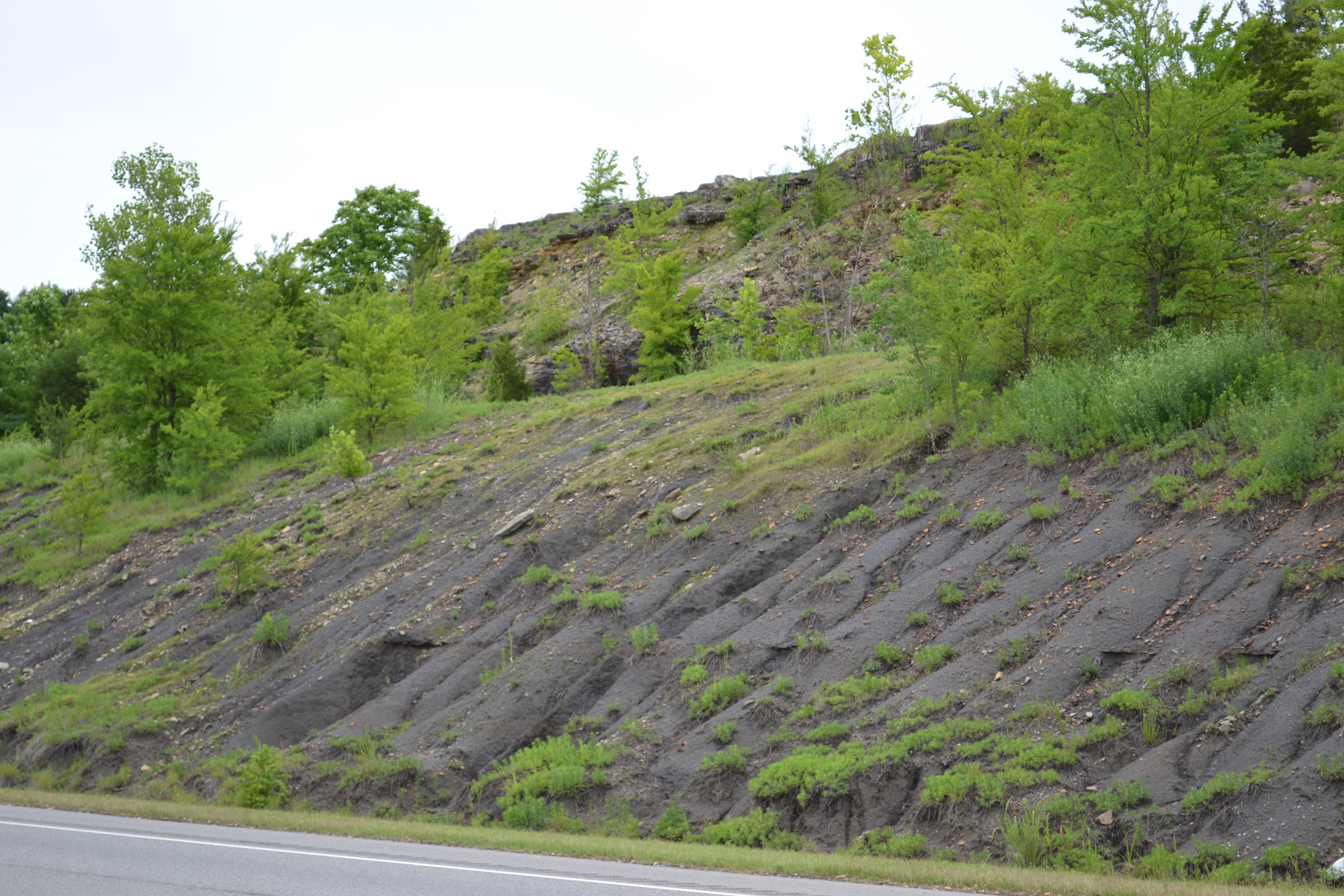 Hartselle sandstone outcropping at Black Wax Hill, Lawrence County, Alabama, photo by Sheree Martin