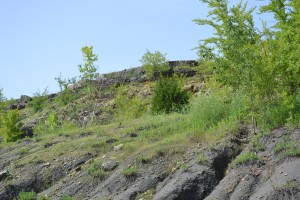 Black Wax Hill Oil Sands Outcropping, Lawrence County Alabama Photo by Sheree Martin